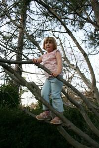 Tills climbing the figs.