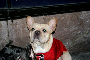 Even the bulldogs want you to be sure you know for whom they are pulling . . .