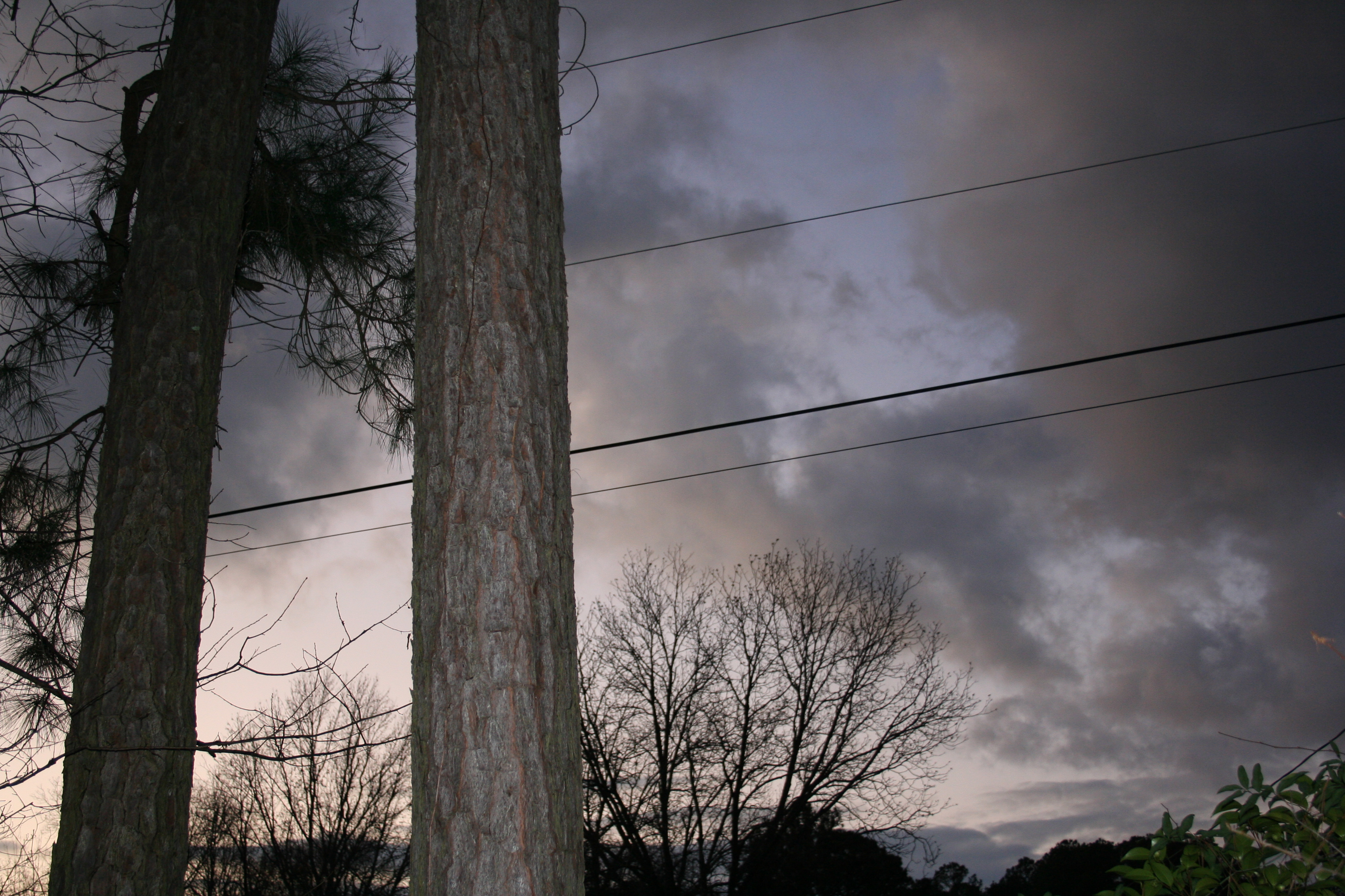 Dusk Sky with Powerlines and Pines
