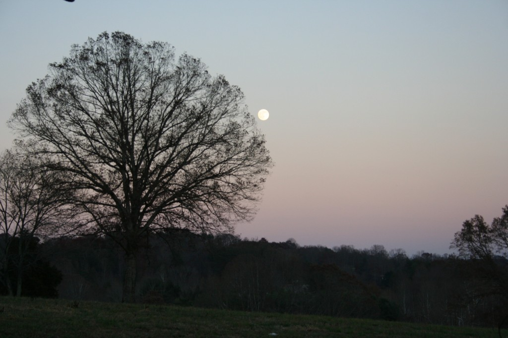 We had a full moon. Dusk at the farm is my fave.