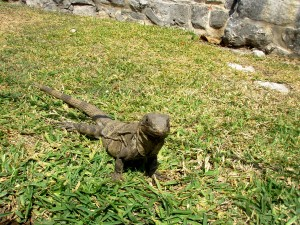 These guys crack me up. They are EVERYWHERE at Tulum, just hanging out. Very funny.