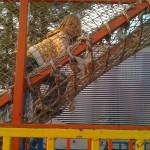 Tiller on the rope ladder