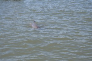 There were actually two dolphins.
